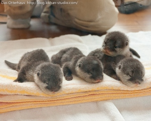 Three out of four baby otters approve of you buying Generation V. And the fourth was too busy snoozing adorably to approve it.