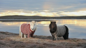 You are the cardigan to my shetland pony. The shetland pony might be able to exist without a cardigan, but the pony will be far, far poorer for its lack.