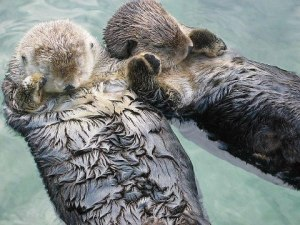 Sleeping sea otters holding hands think that you should buy a copy of Generation V! Are you going to tell those sleeping sea otters holding hands that they are wrong?