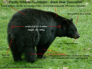Bears are critical to the plot in Book Three. Because someone took their pic-i-nic baskets.