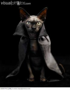 Hairless Cape Cat commands that you buy Generation V before The Thousand Names. Do not risk Hairless Cape Cat's displeasure.