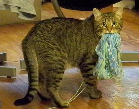 I am ML Brennan and I stand by this picture decision. Just as that cat likely stood by his yarn consumption.