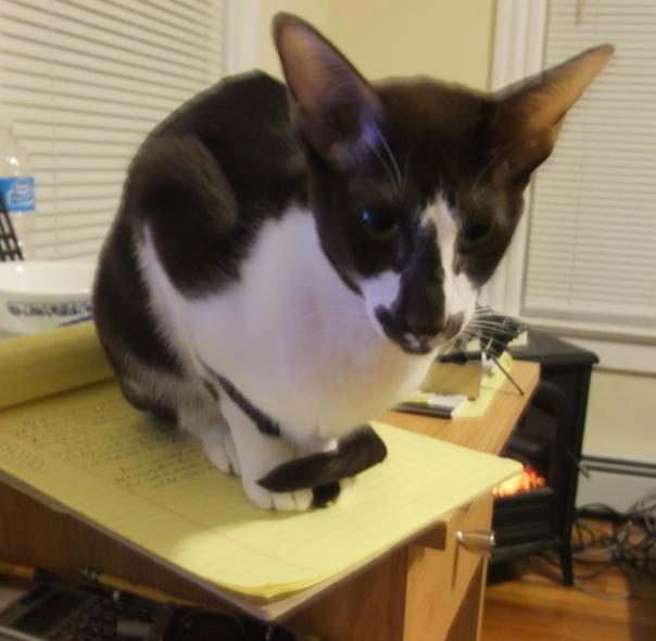 Tuxie helping writing